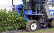 چیدن آسان میوه با ماشین کشاورزی مخصوص!
