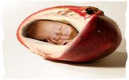 تاثیر آب انار بر مغز جنین