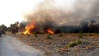 مدیر کل منابع طبیعی بوشهر: حریق در ارتفاعات کوه سیاه دشتی مهار شد