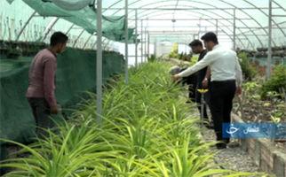 کارآفرینی و راه اندازی شغلی پایدار با یک گیاه دور ریختنی!