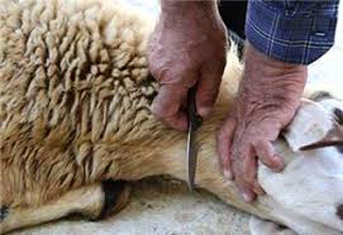 محمدی فرد: امسال به دلیل شیوع ویروس کرونا در هیچ محلهای ذبح گوسفند نداریم