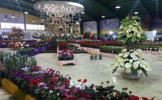 تصاویری دیدنی از نمایشگاه لاله های شهر من در پارک شهیدچمران کرج