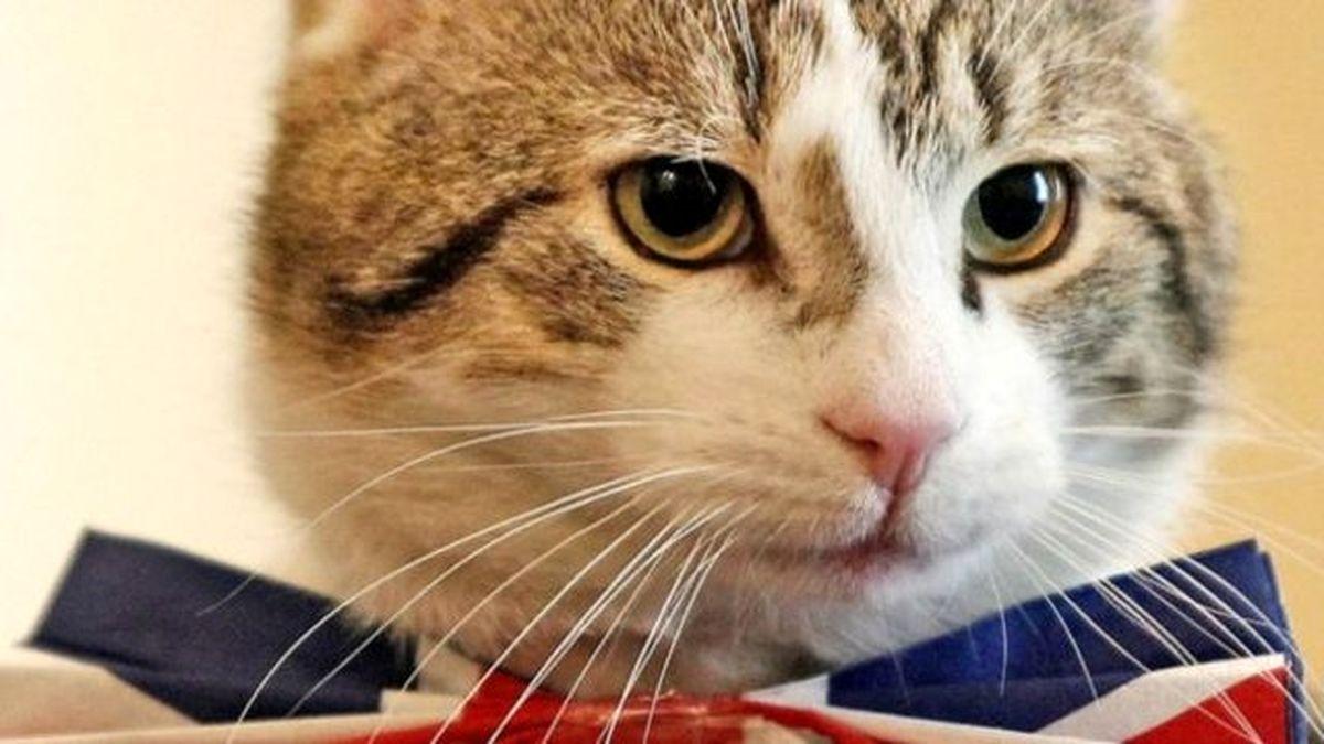 شرایط زندگی «گربههای دیپلمات» در انگلستان