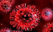 اسپری بینی رشد ویروس کرونا را کاهش میدهد