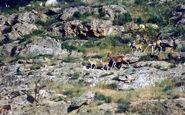 نگاهی به حیات وحش منطقه بیجار در مستندی از کانال اردوی شبکه سحر