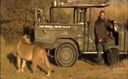 لحظهای نفس گیر برای فیلمبردار حیات وحش + فیلم