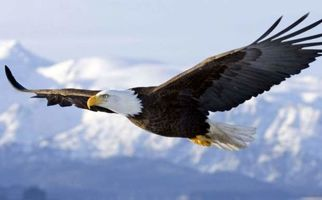 صحنه عجیب پرواز عقاب با کوسه!