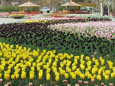 سومین جشنواره گل های لاله در قزوین آغاز شد