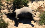 مرگ عجیب و تلخ بیش از ۴۰۰ فیل